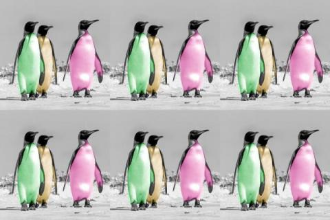 Warhol penguins as non-fungible token (NFT)